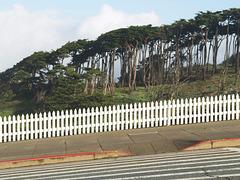 San Francisco (p2115359)