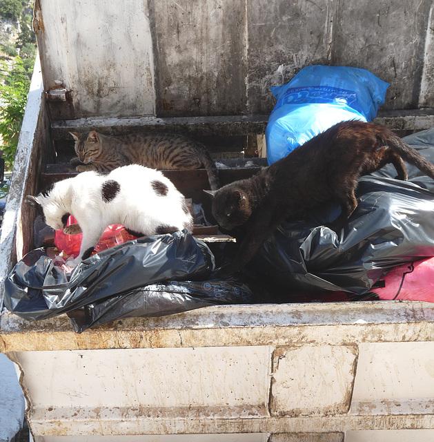 Feline Dumpster Divers