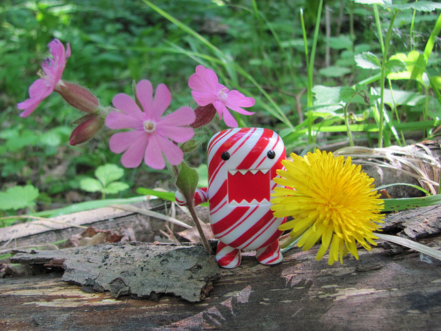 Domo and flowers