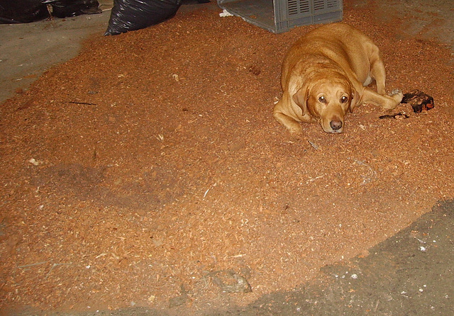 HHD - sawdust
