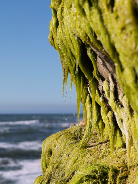 Moss (p1311059)
