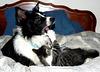 Cats Paw Prybar