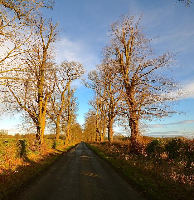 Staffordshire Lane