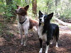 Jake and Idaho