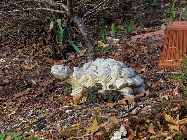 Yard Tortoise