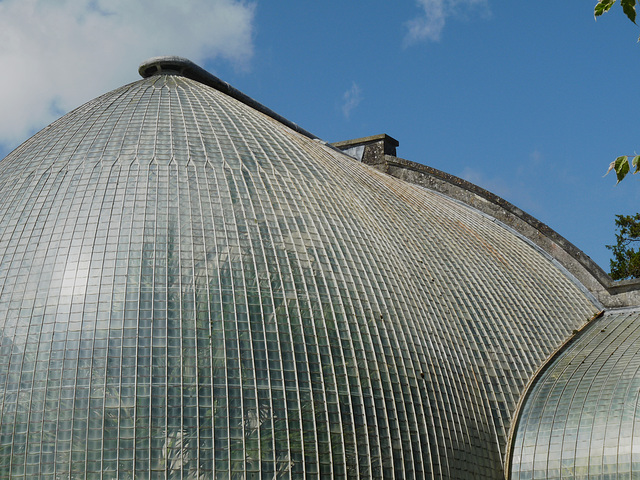 Bicton Gardens- The Palm House Roof