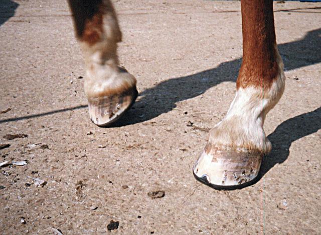 Rubber Shoe2.