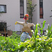 Scarecrow in community garden
