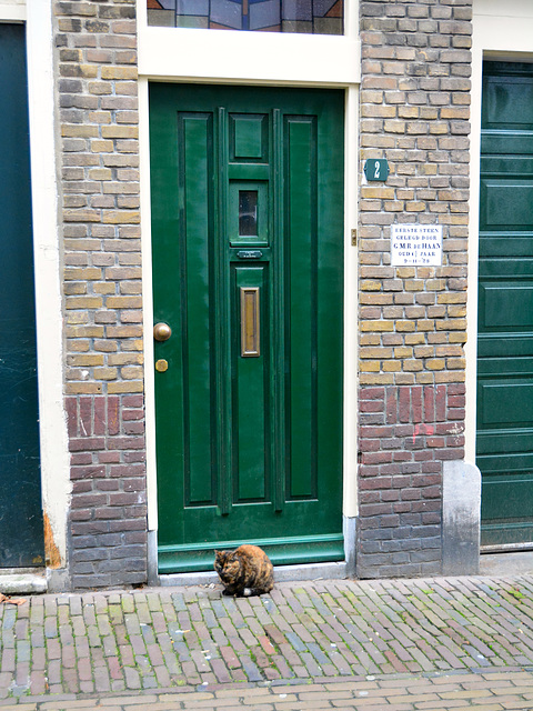 The cat sat for the door