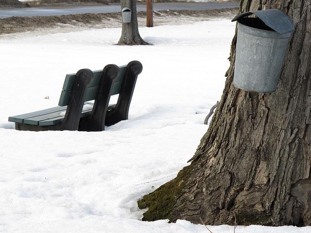 Bench & buckets