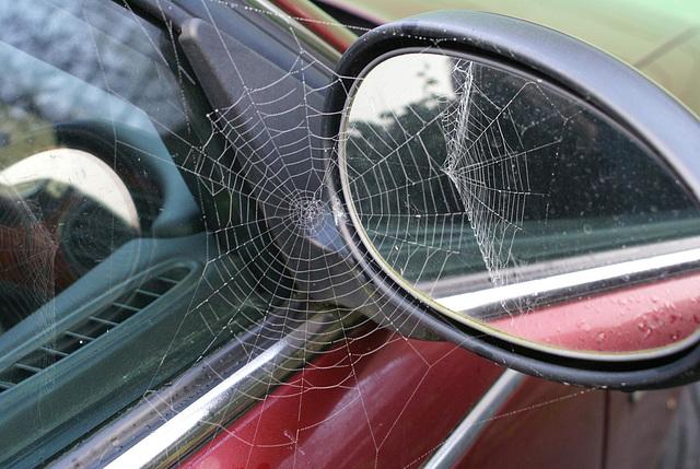 oaw - spiderweb