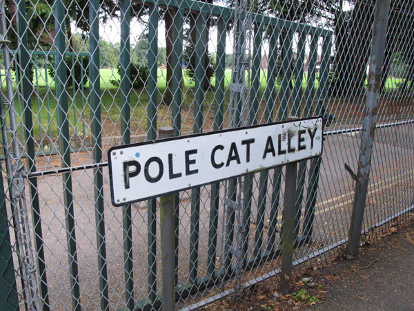 Pole Cat Alley