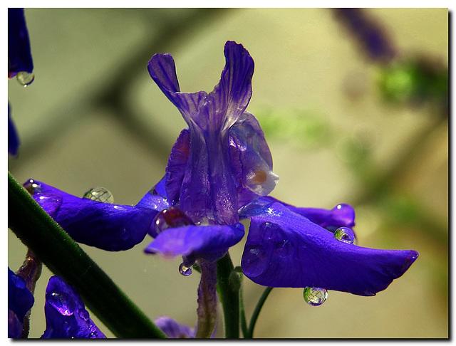 Blütentropfen