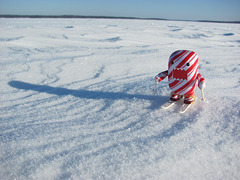 Domo skiing on a frozen lake