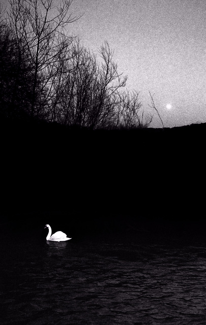 Swan, Moon and High Water