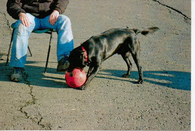 BDD - play ball
