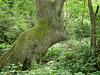Giant rabbit tree trunk