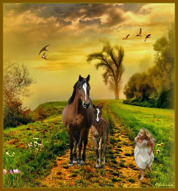 Cours vers les chevaux !