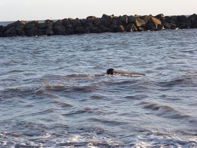 BDD - really swimming