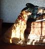 HHD - sunshine dog