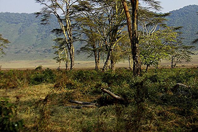 Dans le cratère du Ngorongoro