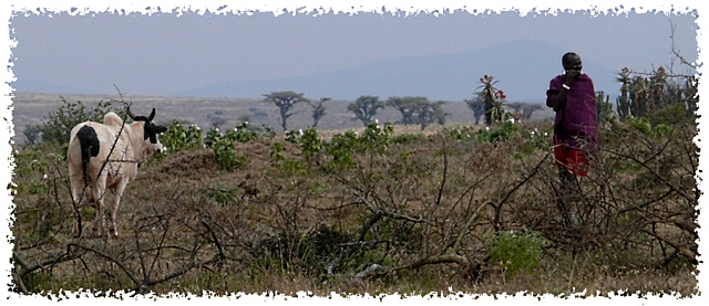 Paysage masaaï