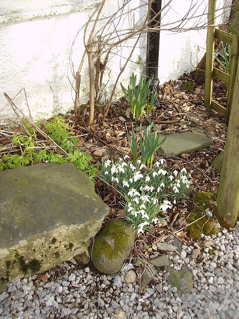 gbw - lakes snowdrops