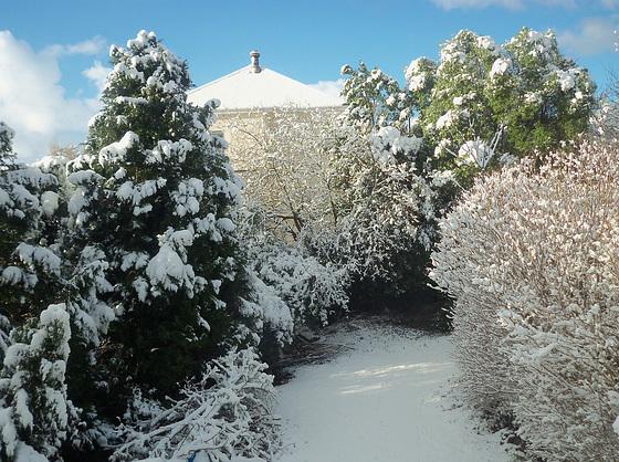 Pristine snow in my drive