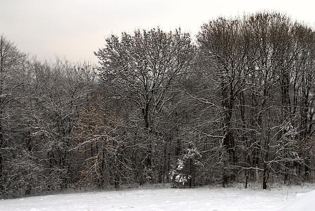 Alles ist verschneit