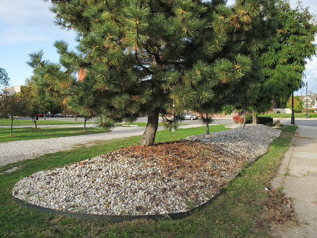 Good good longlasting pile of gravel for these trees.