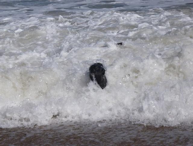 BDD - surfing