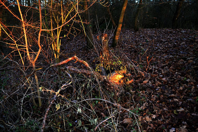 im Wald die Sonne eingefangen...