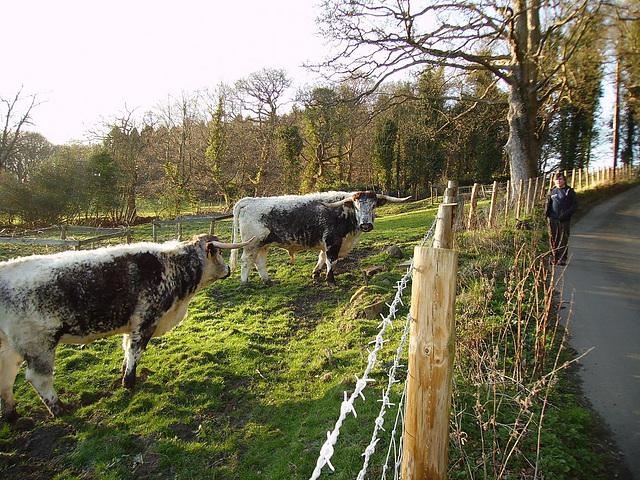 oad - longhorns