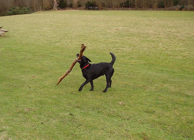 BDD - big stick