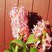 gbw - spring flowers