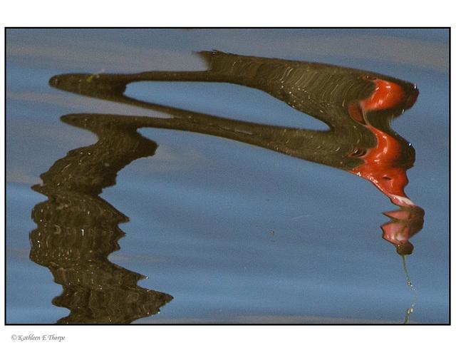 Swan Reflection Dali