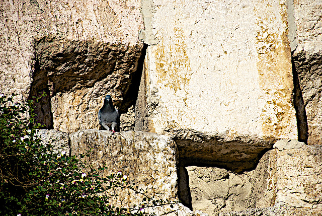 pigeons of the wall...