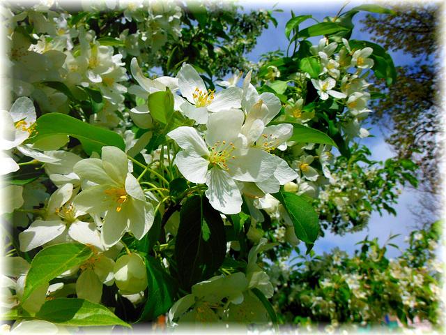 Un printemps tout en beauté