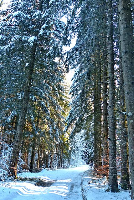 P1070875- Belle forêt