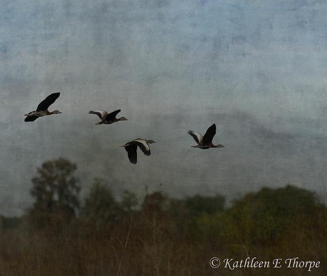 Whistling Ducks in Flight - Flypaper Texture