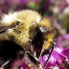 Eye of the Bee