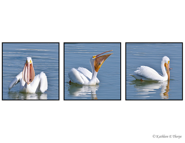 White Pelican Dining Experience