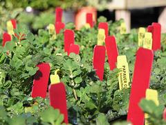 Seedlings (p1290196)