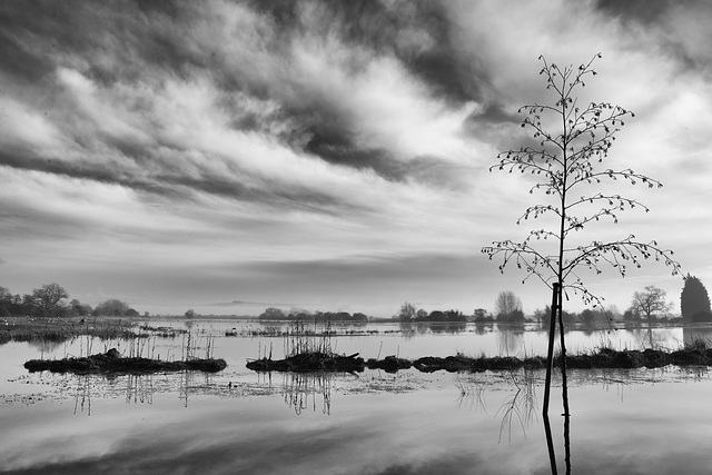 Flooded fields in winter light - 2  (Black and White version)