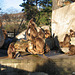 Dscheladas beim Sonnenbad (Wilhelma)