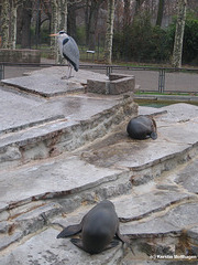 Besuch bei den Seelöwen (Wilhelma)