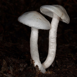 M is for Magnificent Mushrooms (+ 18 insets)