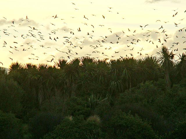 Birds above the dump.