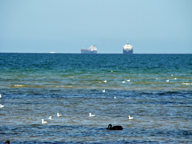 Ships and seabirds