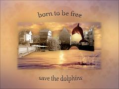 born to be free (chiche)